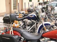 Harley Days In Wien mit Mr. Blumi