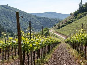 Wiener Weinwandertag am 26. und 27. September